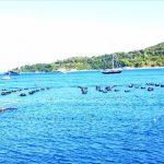 Venere Azzurra, allenamenti nelle acque del lido Arenella